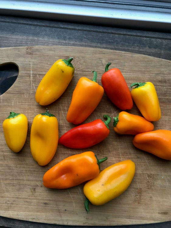Small yellow, orange and red sweet peppers on cutting board
